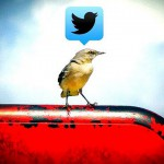Small bird perched on metal chair with Twitter logo in thought bubble